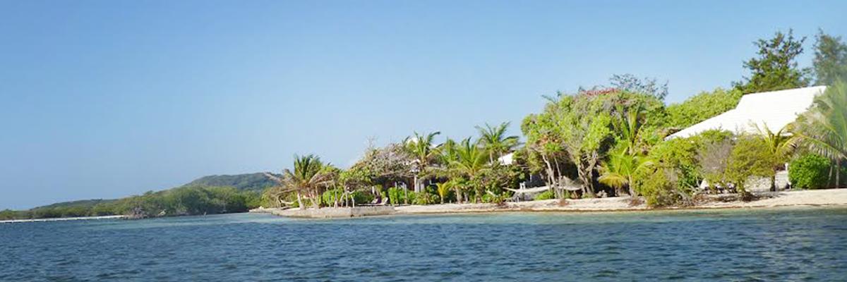 Palm trees and beaches roatan honduras