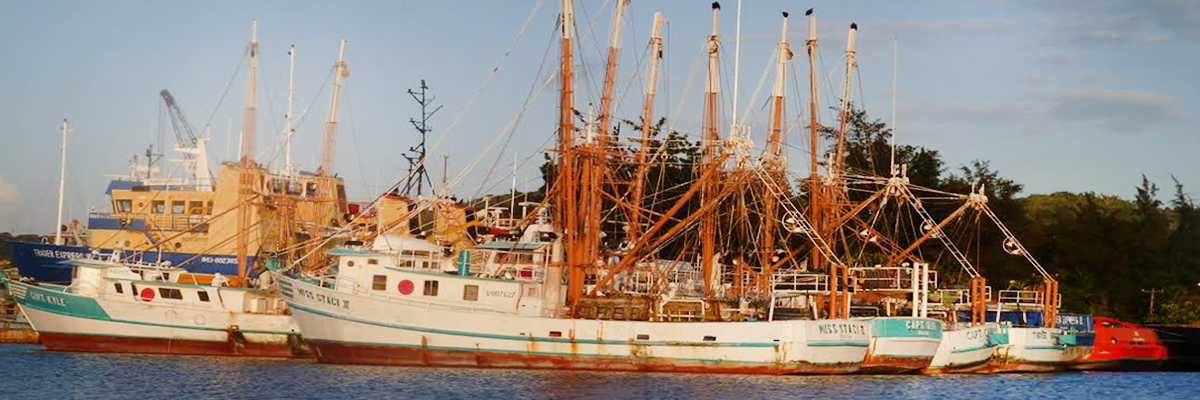 Boats docked part of the roatan honduras fishing fleet